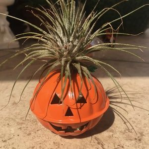 NWT Pumpkin with Living Airplant Halloween Decor